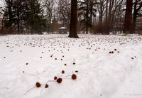 2014_TBG_Winter_1111124_JMR